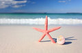 Sea star and seashell on the seashore Royalty Free Stock Photo