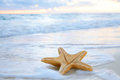 Sea star starfish on beach, blue sea Royalty Free Stock Photo