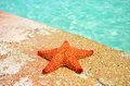 Sea star starfish ondock caribbean sea Royalty Free Stock Images