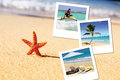 Sea starfish and pics Royalty Free Stock Photo