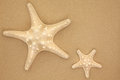 Sea stars seashell starfish over beach sand background Royalty Free Stock Photography