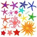 Sea stars set. Multicolored starfish on a white background. Starfishes underwater invertebrate animal. Vector Royalty Free Stock Photo