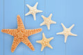 Sea stars starfish shell abstract design over blue wooden background Royalty Free Stock Images