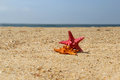 Sea stars, starfishes Stock Photography