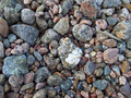 Sea ​​stones colored pebbles on the shore Stock Photography