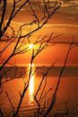 Sea sunset baltic golden summer branches of tree Stock Photos