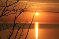 Sea sunset baltic golden summer branches of tree branches of tree Stock Photography