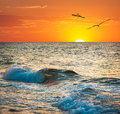 Sea sunset with seagulls ocean wave at sundown on the tropical beach Stock Image