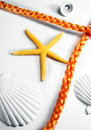 Sea theme seastar orange rope and few scallops on white Stock Images