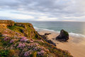 Sea thrift carpet a of flowering on the cornwall coast at bedruthan steps Stock Image