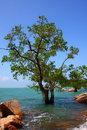 Sea and tree Royalty Free Stock Photo