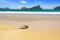 Sea turtle on a beach. Royalty Free Stock Images