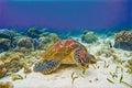 Sea turtle in blue sea. Tropical seashore nature digital illustration. Royalty Free Stock Photo