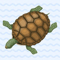 Sea turtle cartoon animal sea wildlife ocean green underwater swim reptile vector illustration Royalty Free Stock Photo