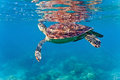 Sea turtle on the coral reef Royalty Free Stock Photo