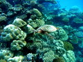 Sea turtle a green swimming around laamu island maldives Stock Images