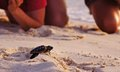 Sea turtle hatchling loggerhead baby on the beach beginning his journey people watching Royalty Free Stock Photography