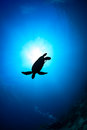 Sea turtle silhouette with sunburst of a behind and scuba diver Royalty Free Stock Photography