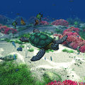 Sea turtle a swims through the ocean a wounderful undersea scene with tropic fishes corals anemone sponge and more Stock Image