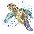 Sea turtle T-shirt graphics. sea turtle illustration with splash watercolor textured background. unusual illustration watercolor Royalty Free Stock Photo