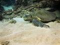 Sea turtle underwater photo maui hawaii Stock Photos