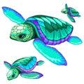 Sea Turtles Dance Oceanlife Vector Illustration Royalty Free Stock Photo