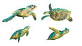 Sea turtles isolated Royalty Free Stock Photo