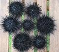 Sea urchin, echinus Stock Photo