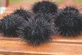 Sea urchin, echinus Royalty Free Stock Image