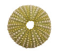 Sea Urchin Shell Isolated On W...