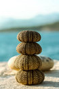 Sea urchin shells stacked on the stone wall over the Stock Photo