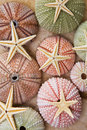 Sea Urchins and Starfish Royalty Free Stock Photo