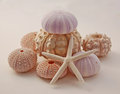Sea urchins and starfish Royalty Free Stock Photo