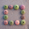 Sea urchins on wet sand frame Royalty Free Stock Images