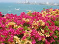 Sea view biautiful flowers and pathaya Stock Image