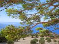 Sea view through the pines Royalty Free Stock Photo