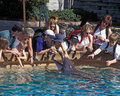 Sea World Dolphin Touch Pool - Orlando Royalty Free Stock Image