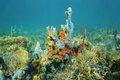 Seabed with colorful marine life of caribbean sea composed by corals and sponges in the Stock Image