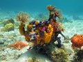Seabed with colorful sea life in the caribbean Royalty Free Stock Photography