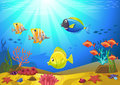 Seabed with corals vectorial illustration of a and small fishes Stock Photos