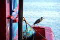 Seabird closeup holding on fishing boat Royalty Free Stock Photography