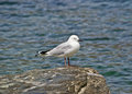 Seabird a stand on a rock Royalty Free Stock Images