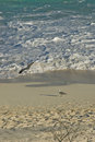 Seabirds on beach  Stock Photos