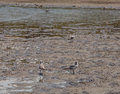 Seabirds on the beach santa catalina panama Stock Images