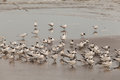 Seabirds colony in santa catalina panama Stock Photos