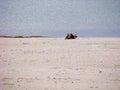Seacoast sand beach sunny day at sea Stock Photo