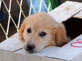 Sead puppy Royalty Free Stock Photo