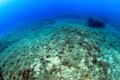 Seafloor of majorca in the mediterranean sea Stock Photography