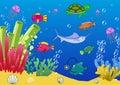The seafloor of the ocean. The seafloor of the sea.