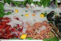 Seafood cabinet, Andalusia, Spain. Royalty Free Stock Photography